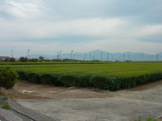 Tea plantation in Kirishima