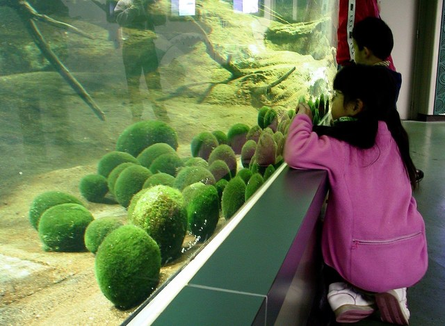 Marimo exhibition and observation center