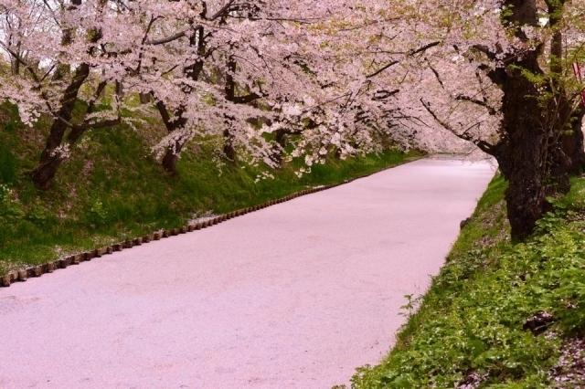 Hana-ikada of Hirosaki Park