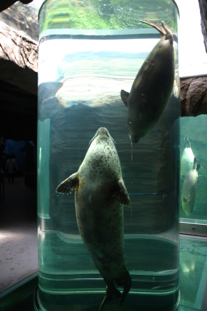 Asahiyama Zoo.jpg