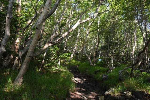 Dake-kanba forest on Subashiri Trail, Mt. Fuji