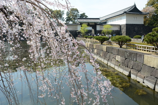 Shidare-zakura in front of Ōte Gate of Imperial Palace