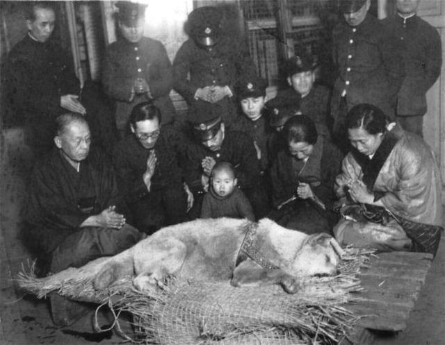 Death of Hachi-kō