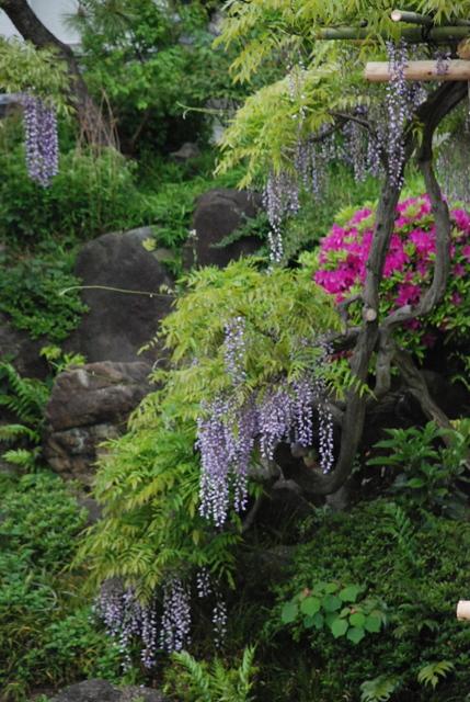 Fuji at Kameido Tenjin Shrine