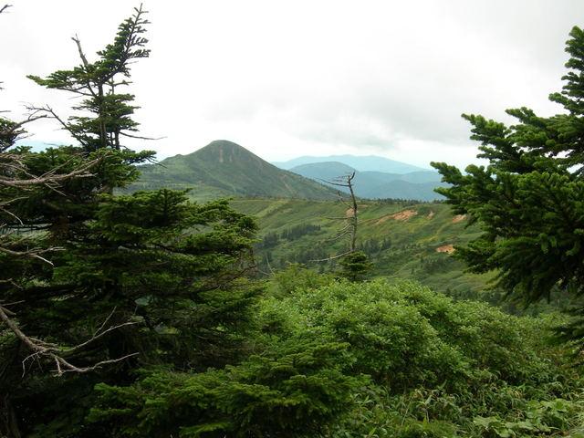 Ōshirabiso at Mt. Hachimantai