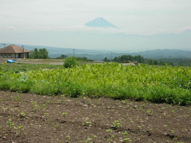 Mt. Fuji from Hokuto City