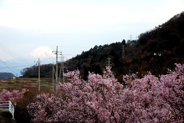 北杜市 桜と富士山 (2).JPG