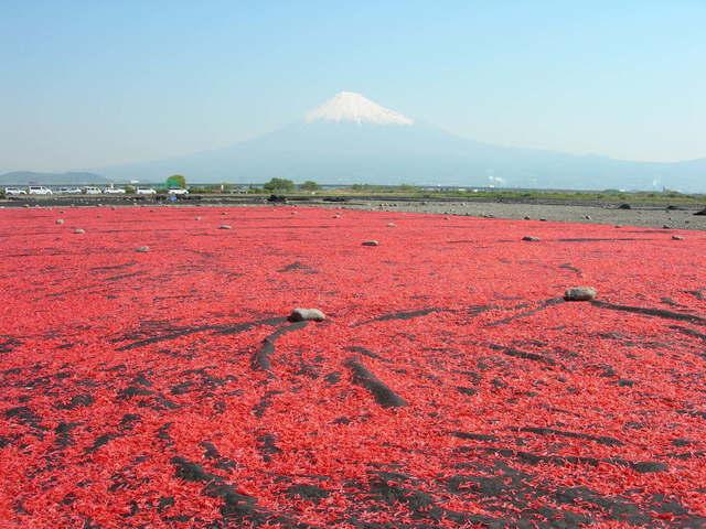 Mt. Fuji & dried shrimps from the Bank of Fujikawa River