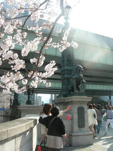 日本橋と桜 (3).JPG