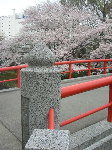 松戸神社  桜 (63).JPG