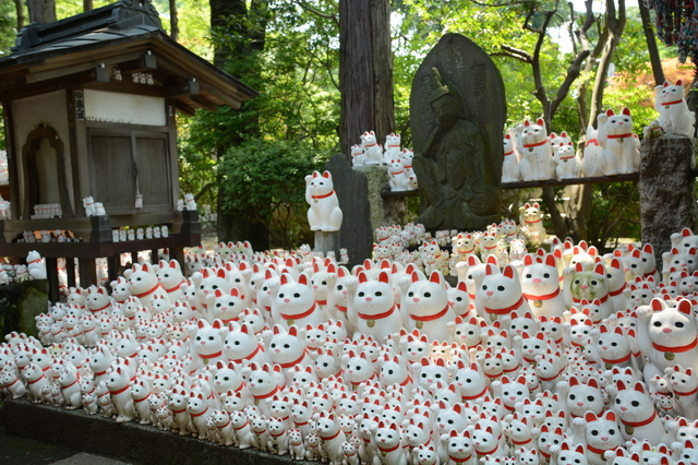 Offered Maneki-nekos in Gōtoku-ji