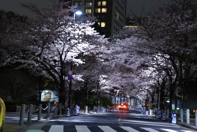 赤坂 桜 (14).JPG