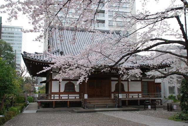 陽泉寺 桜 (3).JPG