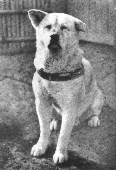 Hachi-kō