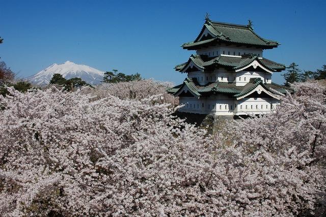 Hirosaki Castle with Sakura.jpg