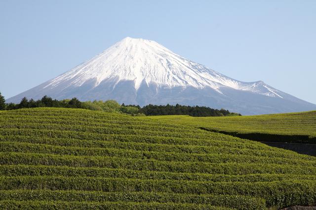 Tea farm & Mt. Fuji